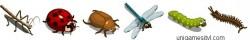 farmville-bugs-collection-items